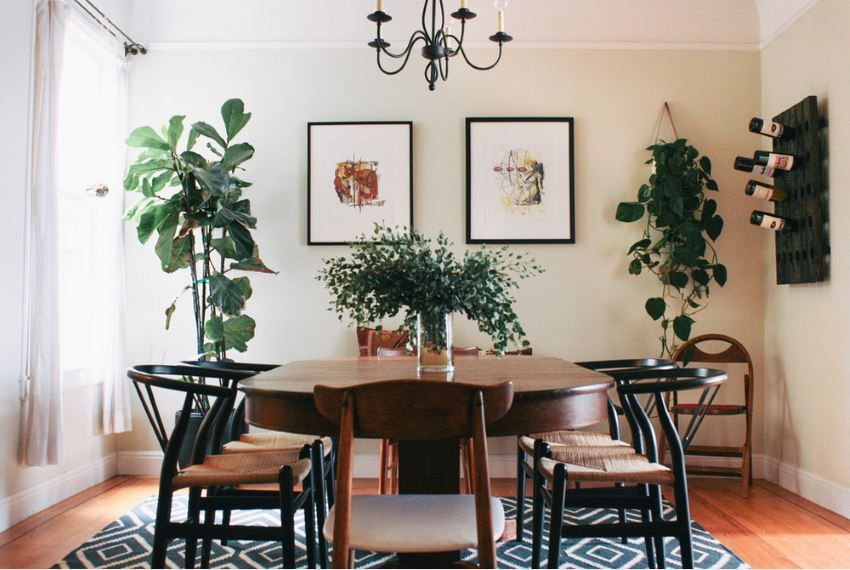 The Best Indoor Plants For Air Conditioned Homes Revealed Arctic Air Heating Cooling